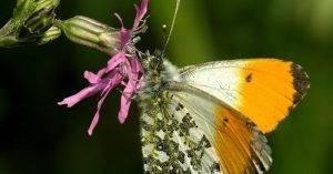 A rovarok osztályának főbb rendjei. Testfelépítésük, életfolyamataik jellemzői.