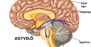 Az emberi agy részei és egyes részek főbb feladatai