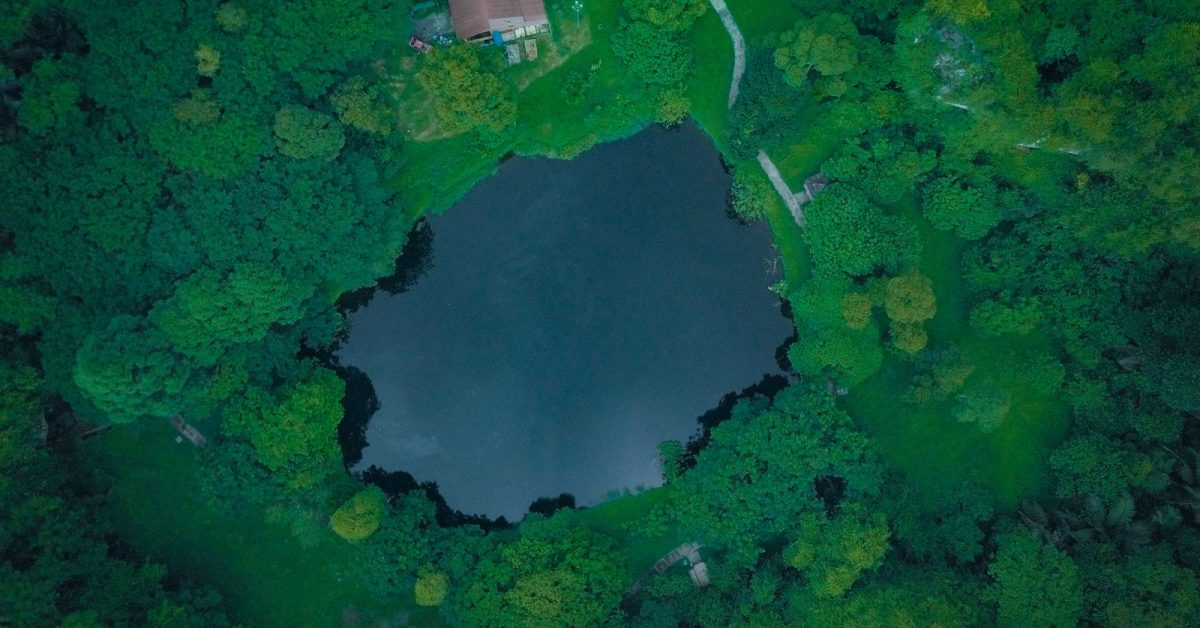 aerial photo of a body of water between trees