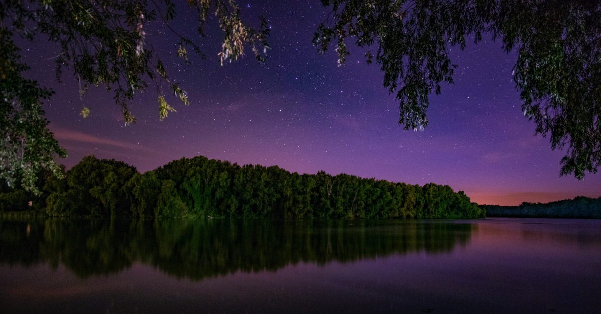 forest and body of water during night
