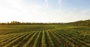 A magyar mezőgazdaság adottságai, fejlődésének lehetőségei