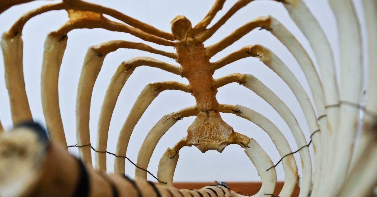animal bone photography