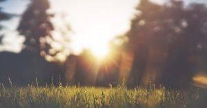 Fény, mint környezeti tényező
