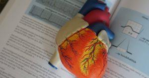 A szív és keringés
