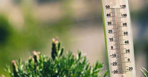 Hőmérséklet, mint környezeti tényező