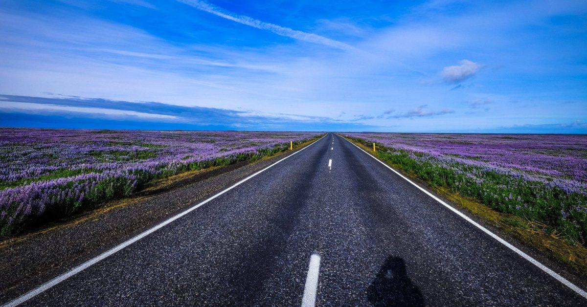 empty pave road between purple petaled flower plant field