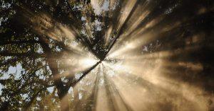 A fény, mint környezeti tényező