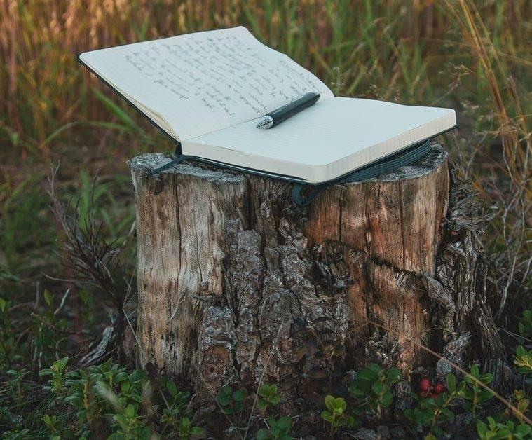 white book on brown wood log